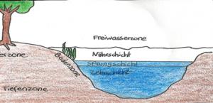 Ökosystem-See