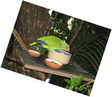 Papagei-Nina-Streith-und-Valentina-Balaban