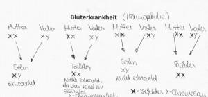 bluter1