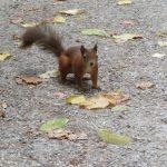 Eichhörnchen im Schlosspark Schönbrunn