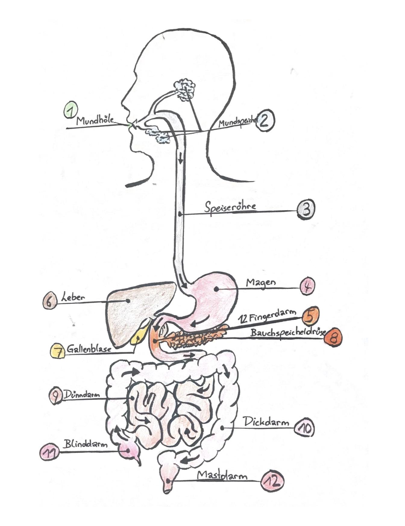 Stoffwechselerkrankungen | Die NAWI Homepage