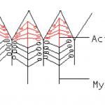 Action und Myosin
