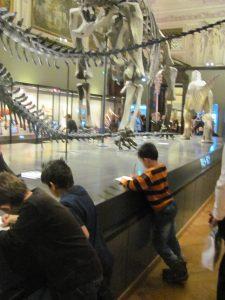 Dinosaurierskelette im NHMW