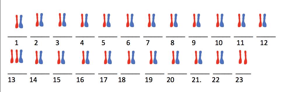 Wie viele chromosome hat ein mensch